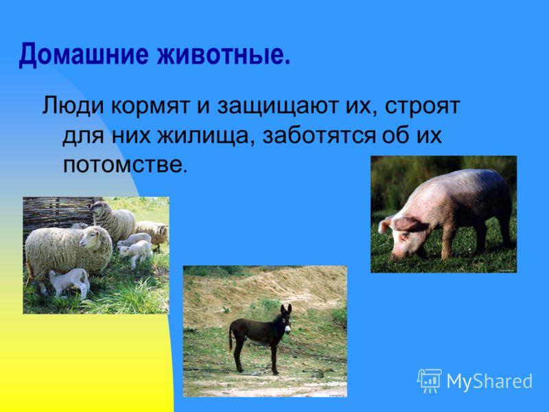 Домашние животные. Люди кормят и защищают их, строят для них жилища, заботятся об их потомстве.