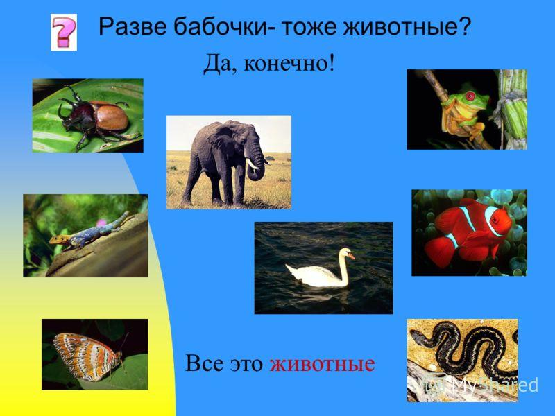 Разве бабочки- тоже животные? Все это животные Да, конечно!
