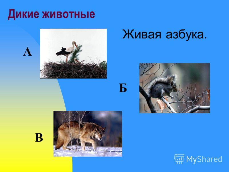Дикие животные Живая азбука. А Б В