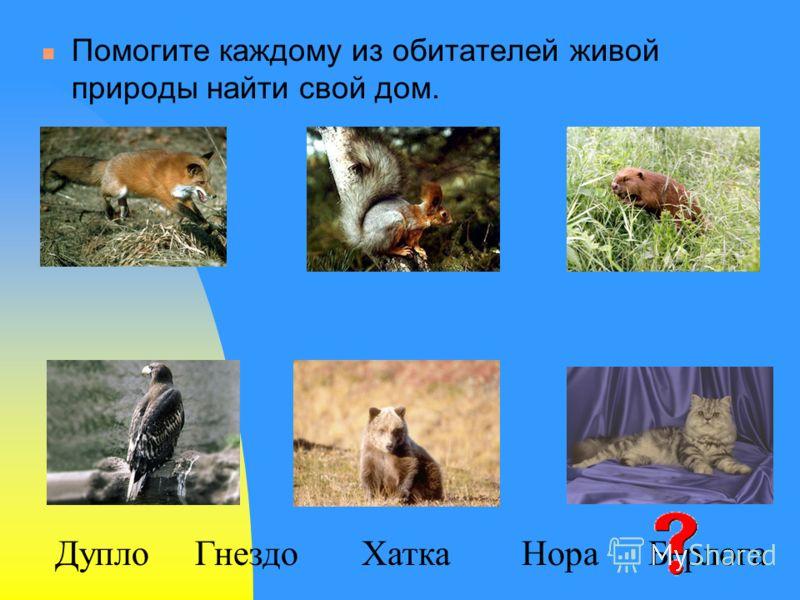 Помогите каждому из обитателей живой природы найти свой дом. БерлогаНораДуплоХаткаГнездо