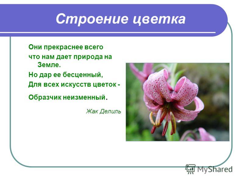 Строение цветка Они прекраснее всего что нам дает природа на Земле. Но дар ее бесценный, Для всех искусств цветок - Образчик неизменный. Жак Делиль