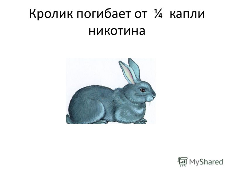 Кролик погибает от ¼ капли никотина