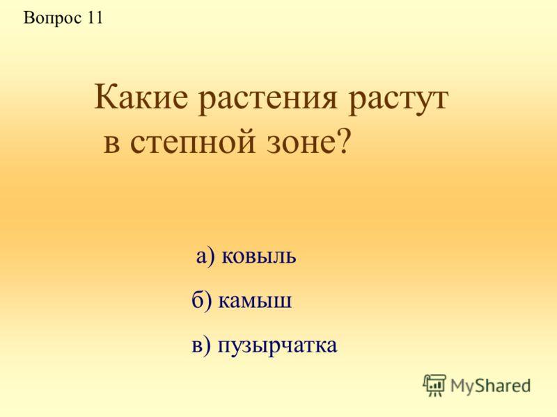 Какие растения растут в степной зоне? а) ковыль б) камыш в) пузырчатка Вопрос 11