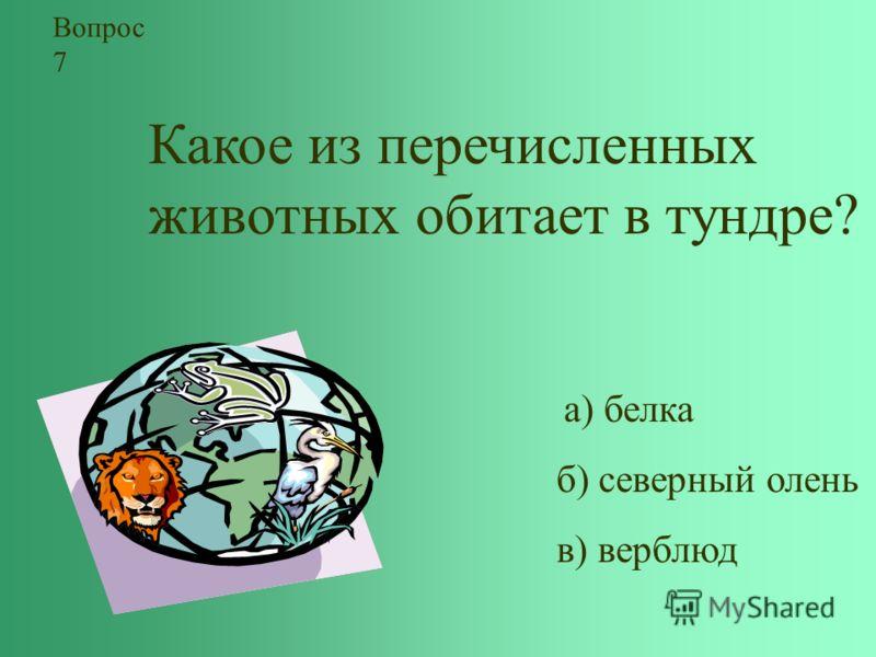 Какое из перечисленных животных обитает в тундре? а) белка б) северный олень в) верблюд Вопрос 7