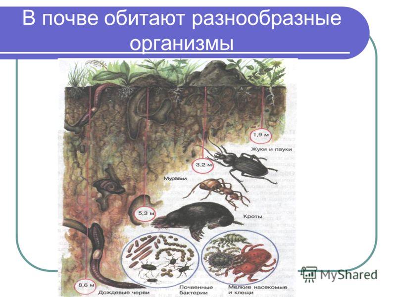 Почва Почва – это верхний тонкий слой земной коры, большей частью покрытый растительностью и обладающий плодородием. Она способна обеспечивать растения водой, воздухом, теплом, и необходимыми питательными веществами, благодаря чему растение развивает