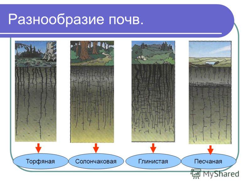 Структуры почвы структурная рассыпчатая, плодородная бесструктурная мелко раздробленная, пылевая