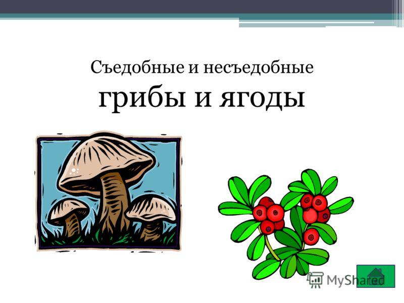 Съедобные и несъедобные грибы и ягоды