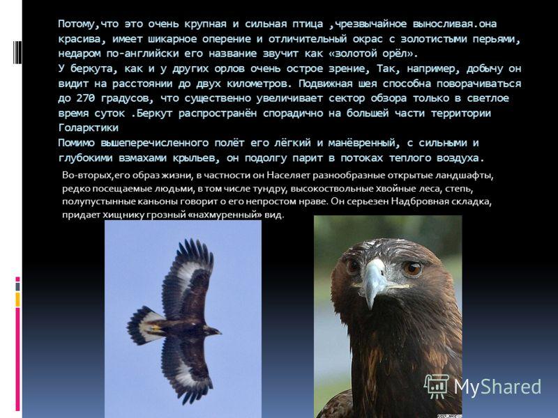 Потому,что это очень крупная и сильная птица,чрезвычайное выносливая.она красива, имеет шикарное оперение и отличительный окрас с золотистыми перьями, недаром по-английски его название звучит как «золотой орёл». У беркута, как и у других орлов очень
