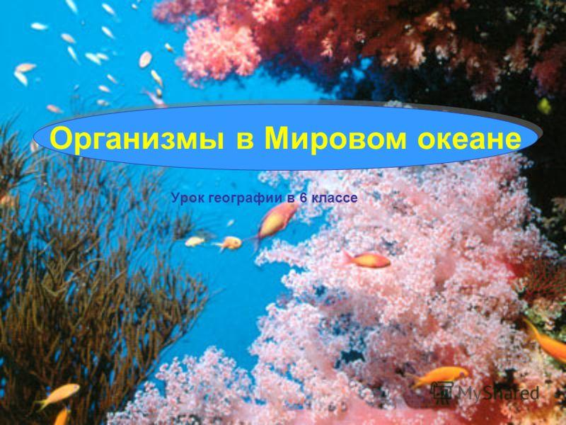 Урок географии в 6 классе Организмы в Мировом океане