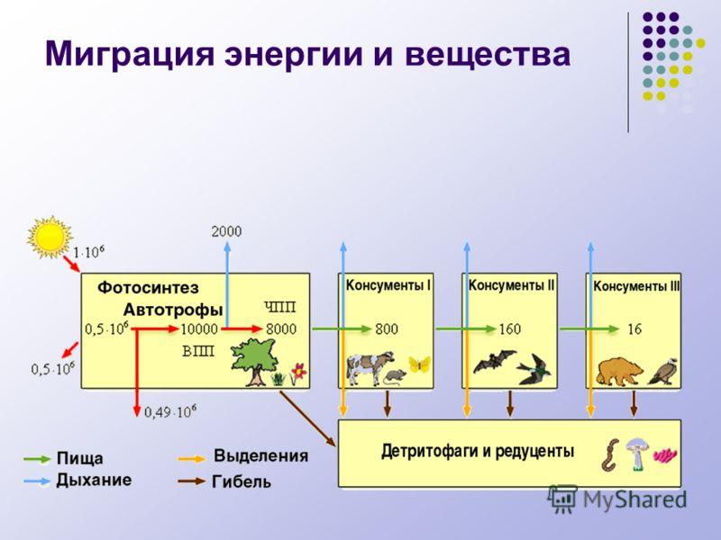 Миграция энергии и вещества