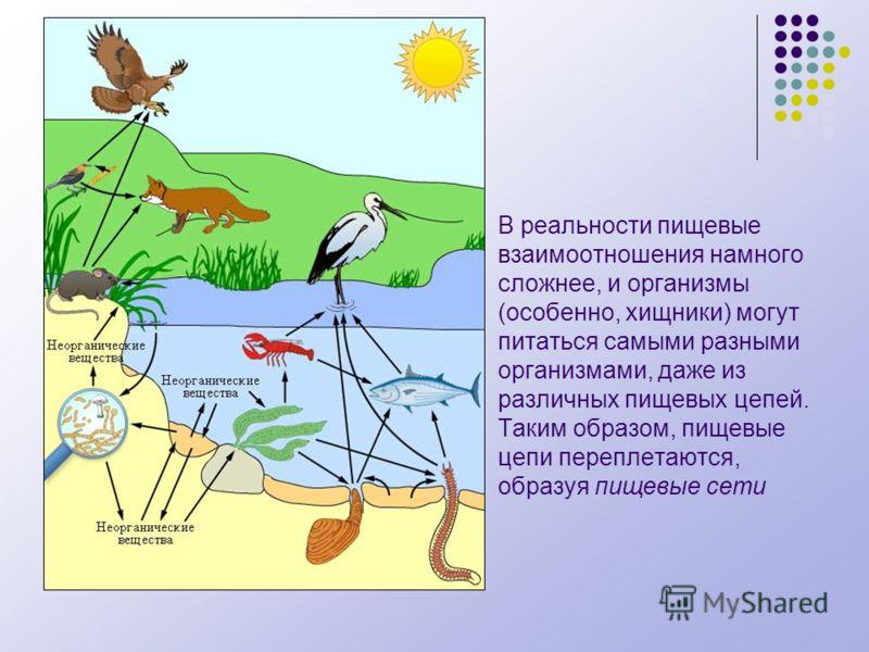 В реальности пищевые взаимоотношения намного сложнее, и организмы (особенно, хищники) могут питаться самыми разными организмами, даже из различных пищевых цепей. Таким образом, пищевые цепи переплетаются, образуя пищевые сети