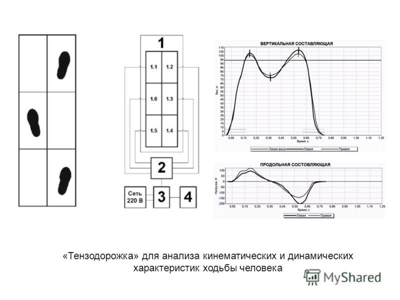 «Тензодорожка» для анализа кинематических и динамических характеристик ходьбы человека
