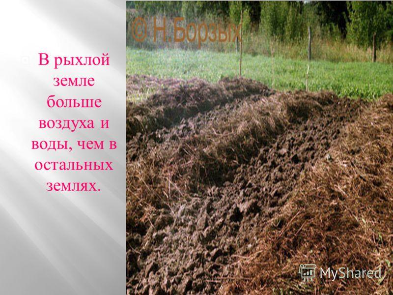 Авторы : Потапова Таня и Карпунина Арина, 5 класс. 2012 год. Караваинский филиал Инжавинской СОШ.