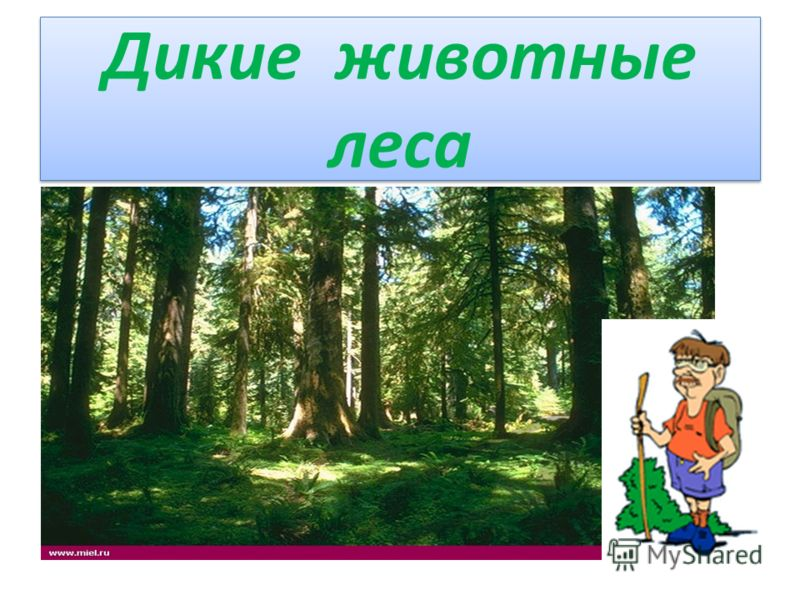 Дикие животные леса