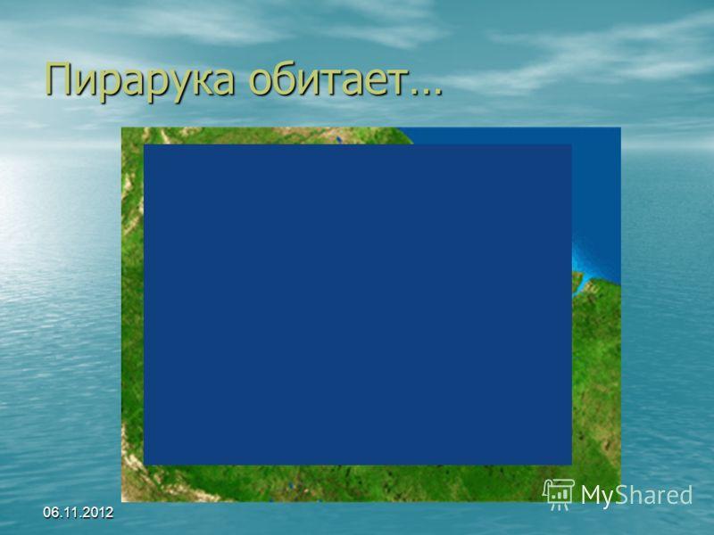 06.11.2012 Пирарука обитает…