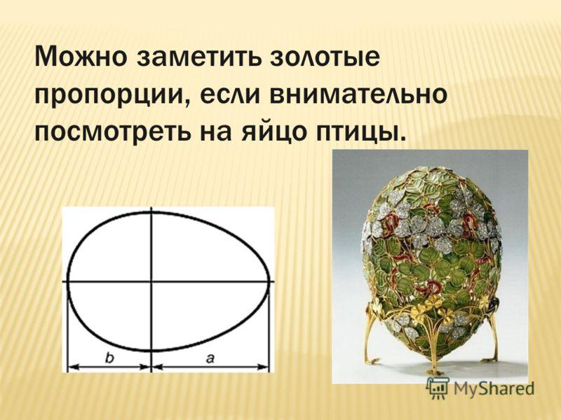 Можно заметить золотые пропорции, если внимательно посмотреть на яйцо птицы.
