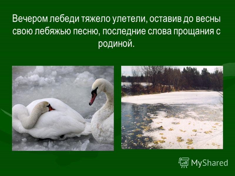 Вечером лебеди тяжело улетели, оставив до весны свою лебяжью песню, последние слова прощания с родиной.