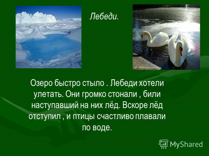 Лебеди. Озеро быстро стыло. Лебеди хотели улетать. Они громко стонали, били наступавший на них лёд. Вскоре лёд отступил, и птицы счастливо плавали по воде.