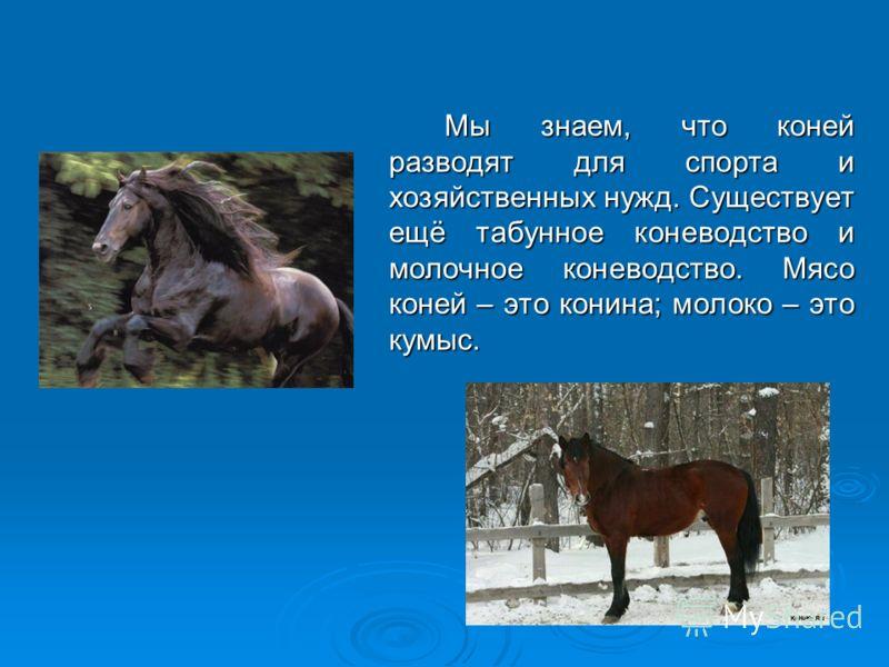 Мы знаем, что коней разводят для спорта и хозяйственных нужд. Существует ещё табунное коневодство и молочное коневодство. Мясо коней – это конина; молоко – это кумыс. Мы знаем, что коней разводят для спорта и хозяйственных нужд. Существует ещё табунн