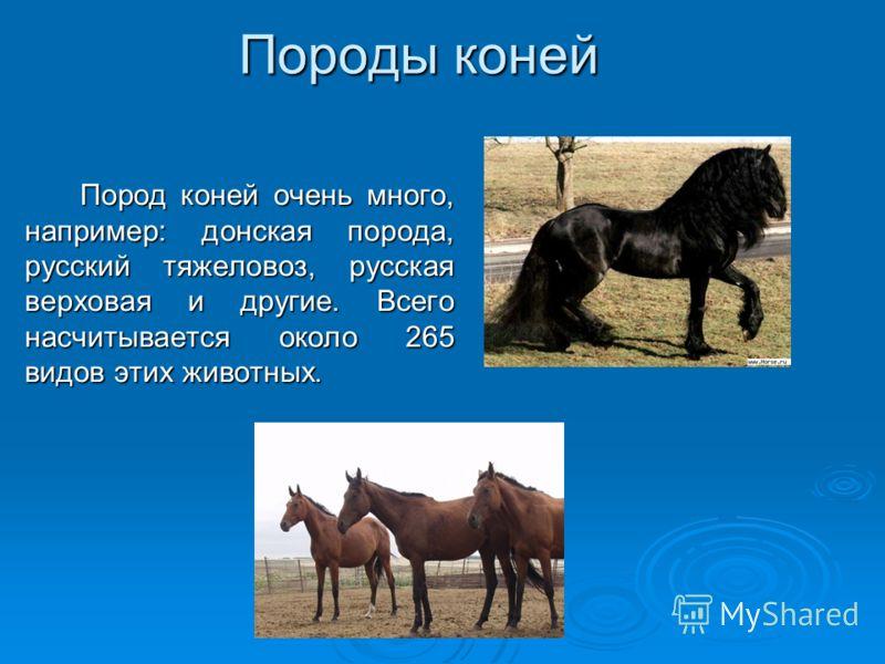 Породы коней Пород коней очень много, например: донская порода, русский тяжеловоз, русская верховая и другие. Всего насчитывается около 265 видов этих животных.