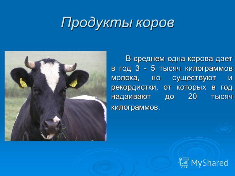 Продукты коров В среднем одна корова дает в год 3 - 5 тысяч килограммов молока, но существуют и рекордистки, от которых в год надаивают до 20 тысяч килограммов. В среднем одна корова дает в год 3 - 5 тысяч килограммов молока, но существуют и рекордис