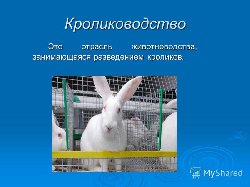 Кролиководство Это отрасль животноводства, занимающаяся разведением кроликов.
