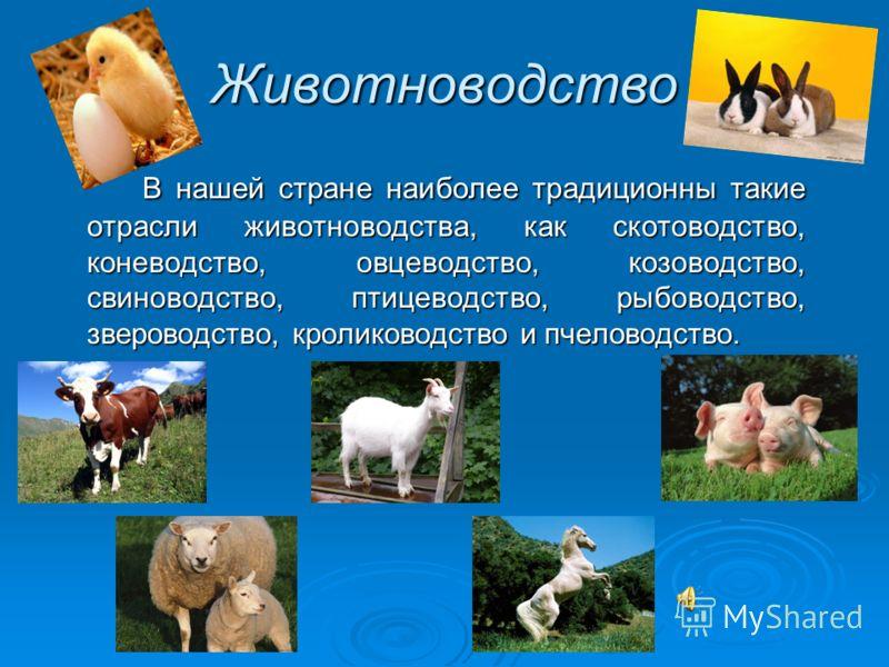 Животноводство В нашей стране наиболее традиционны такие отрасли животноводства, как скотоводство, коневодство, овцеводство, козоводство, свиноводство, птицеводство, рыбоводство, звероводство, кролиководство и пчеловодство.