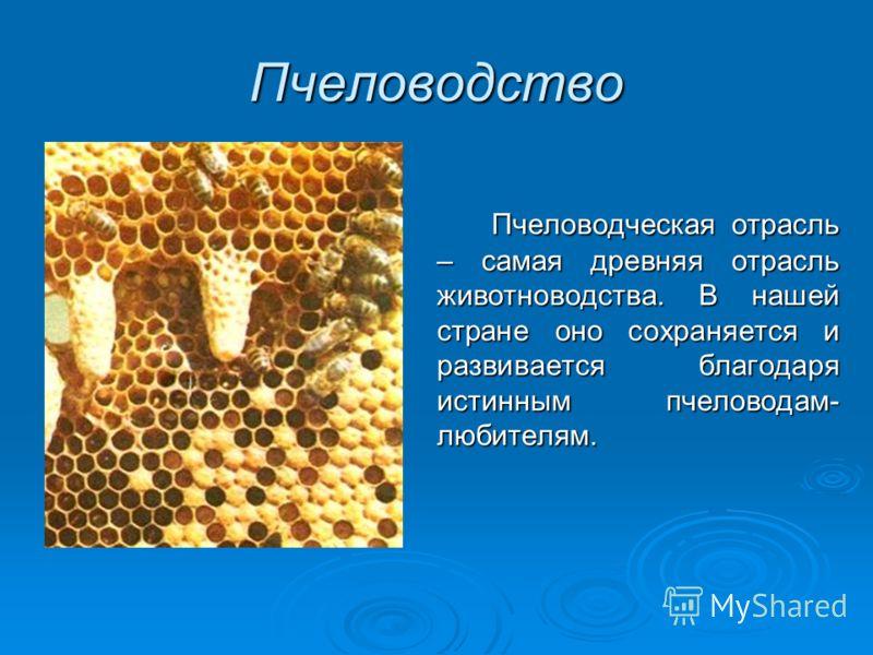 Пчеловодство Пчеловодческая отрасль – самая древняя отрасль животноводства. В нашей стране оно сохраняется и развивается благодаря истинным пчеловодам- любителям.