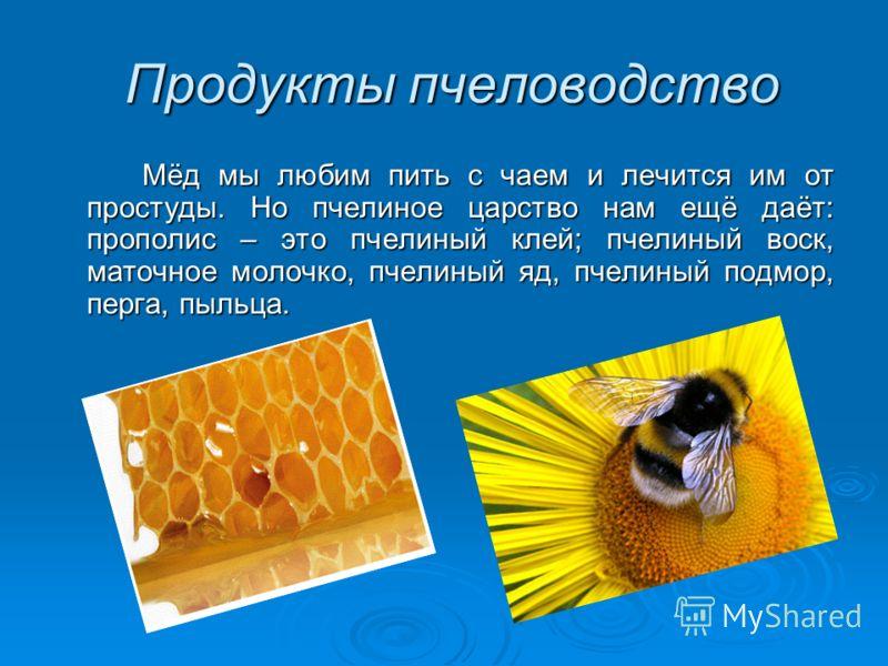 Продукты пчеловодство Продукты пчеловодство Мёд мы любим пить с чаем и лечится им от простуды. Но пчелиное царство нам ещё даёт: прополис – это пчелиный клей; пчелиный воск, маточное молочко, пчелиный яд, пчелиный подмор, перга, пыльца.