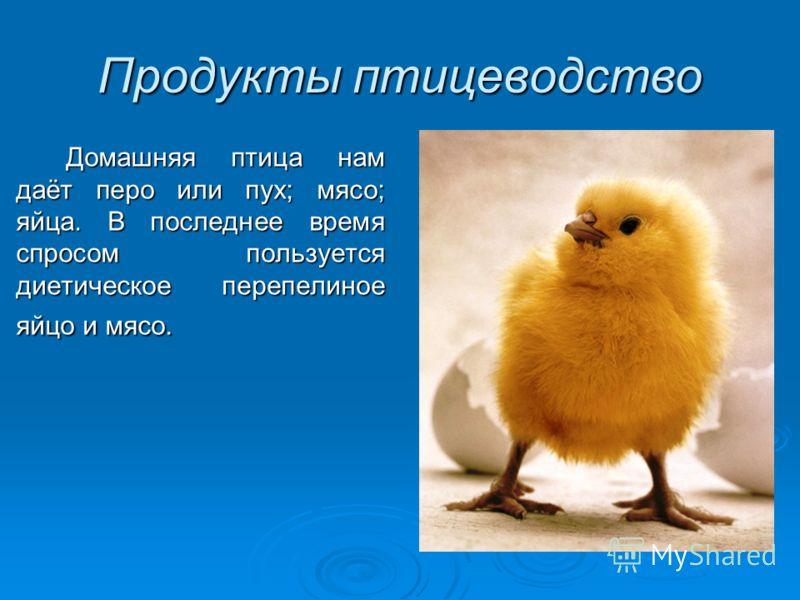Продукты птицеводство Домашняя птица нам даёт перо или пух; мясо; яйца. В последнее время спросом пользуется диетическое перепелиное яйцо и мясо.
