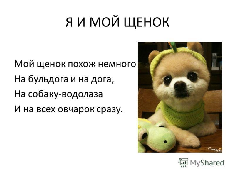 Я И МОЙ ЩЕНОК Мой щенок похож немного На бульдога и на дога, На собаку-водолаза И на всех овчарок сразу.