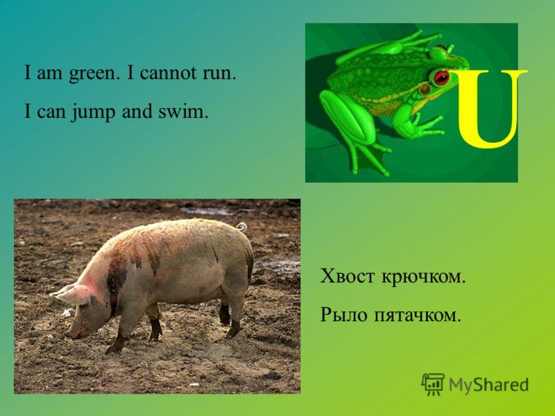 Хвост крючком. Рыло пятачком. I am green. I cannot run. I can jump and swim. U