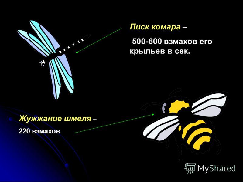 ІІІ. Высота звука Высота звука определяется частотой звуковой волны: чем больше частота, тем звук выше. Высота звука определяется частотой звуковой волны: чем больше частота, тем звук выше.