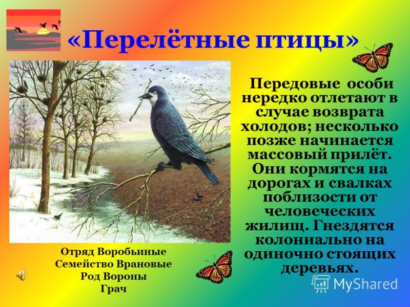 «Перелётные птицы» Передовые особи нередко отлетают в случае возврата холодов; несколько позже начинается массовый прилёт. Они кормятся на дорогах и свалках поблизости от человеческих жилищ. Гнездятся колониально на одиночно стоящих деревьях. Отряд В