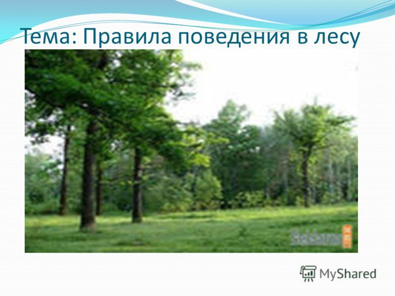 Тема: Правила поведения в лесу