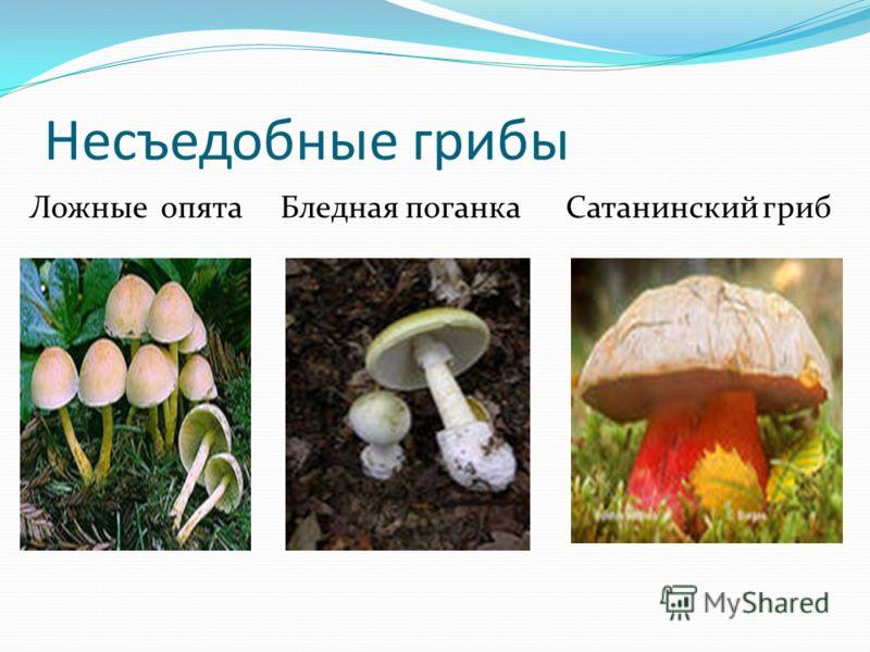 Несъедобные грибы Ложные опята Бледная поганка Сатанинский гриб
