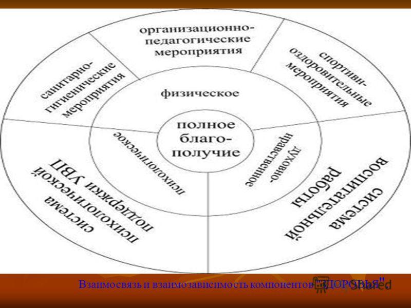 Взаимосвязь и взаимозависимость компонентов ЗДОРОВЬЯ .