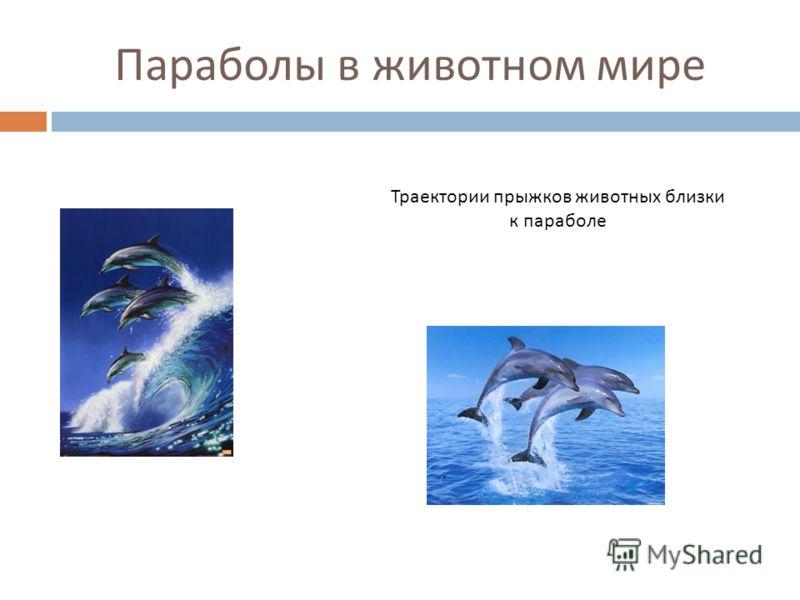 Параболы в животном мире Траектории прыжков животных близки к параболе