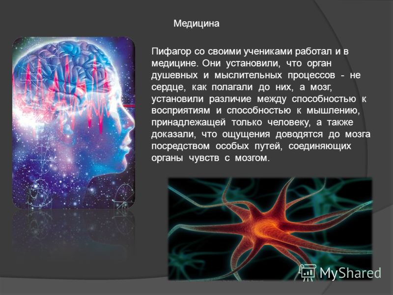 Медицина Пифагор со своими учениками работал и в медицине. Они установили, что орган душевных и мыслительных процессов - не сердце, как полагали до них, а мозг, установили различие между способностью к восприятиям и способностью к мышлению, принадлеж