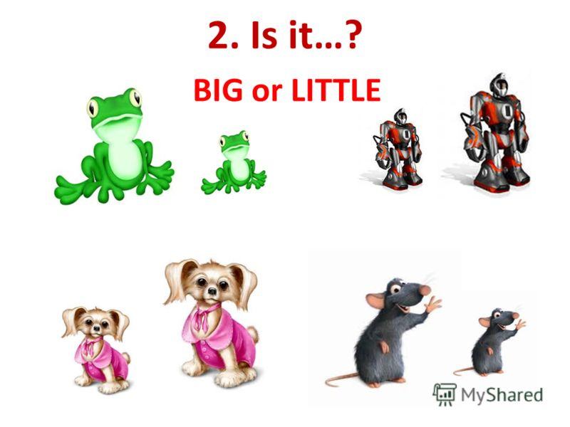 2. Is it…? BIG or LITTLE
