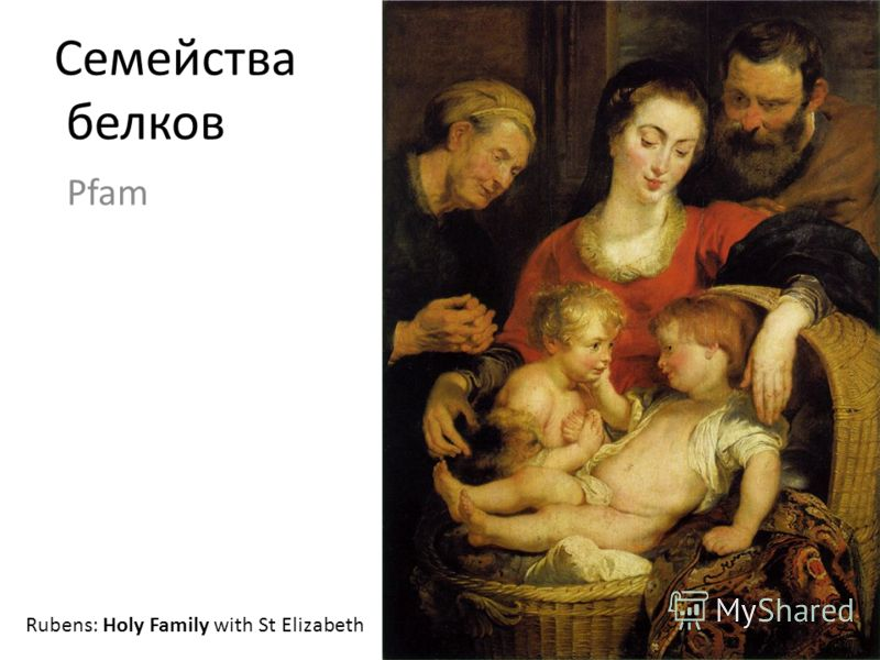 Семейства белков Pfam Rubens: Holy Family with St Elizabeth