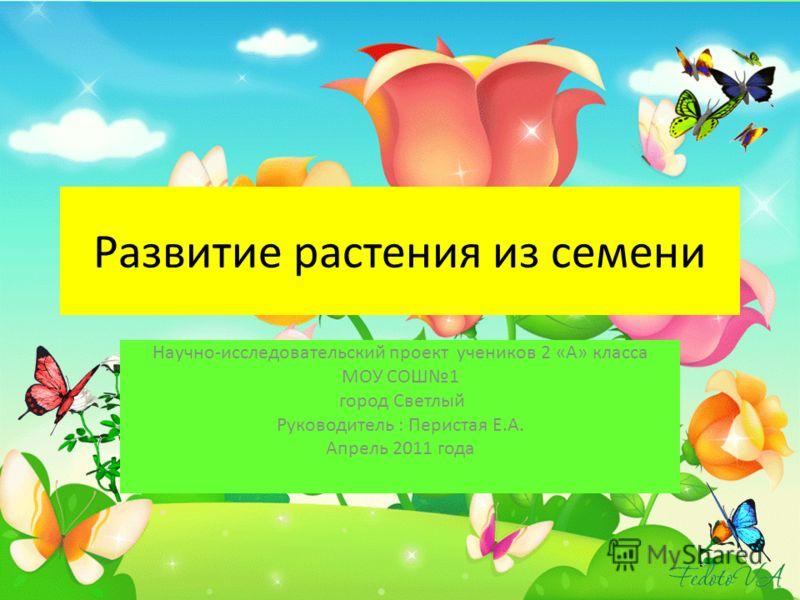 Развитие растения из семени Научно-исследовательский проект учеников 2 «А» класса МОУ СОШ1 город Светлый Руководитель : Перистая Е.А. Апрель 2011 года