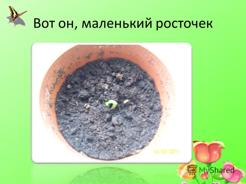 Вот он, маленький росточек