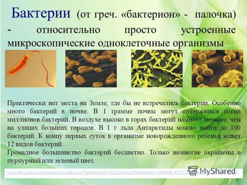 http://files.school-collection.edu.ru/dlrstore/79e9dcbf-0a01-022a-01c9-ce70a69a4304/%5BBIO6_07-51%5D_%5BMV_01%5D.WMV Практически нет места на Земле, где бы не встречались бактерии. Особенно много бактерий в почве. В 1 грамме почвы могут содержаться с