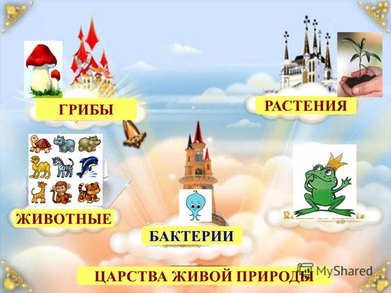 ЦАРСТВА ЖИВОЙ ПРИРОДЫ ГРИБЫ РАСТЕНИЯ ЖИВОТНЫЕ БАКТЕРИИ