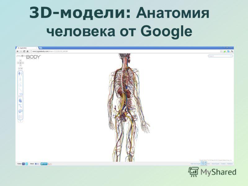 3D-модели: Анатомия человека от Google