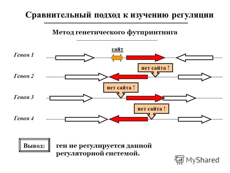 Сравнительный подход к изучению регуляции Метод генетического футпринтинга Геном 1 сайт Вывод: ген не регулируется данной регуляторной системой. Геном 2 Геном 3 Геном 4 нет сайта !