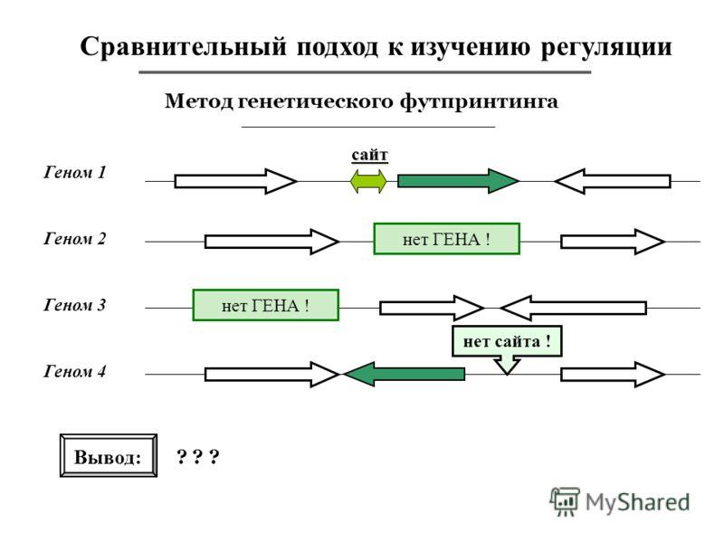 Сравнительный подход к изучению регуляции Метод генетического футпринтинга Геном 1 сайт Вывод: ? ? ? Геном 2 Геном 3 Геном 4 нет сайта ! нет ГЕНА !