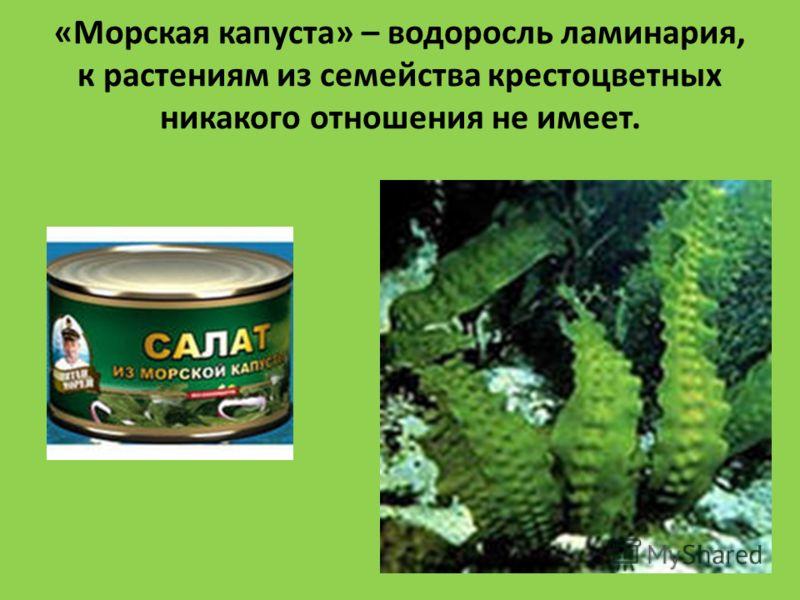 «Морская капуста» – водоросль ламинария, к растениям из семейства крестоцветных никакого отношения не имеет.