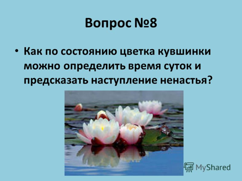 Вопрос 8 Как по состоянию цветка кувшинки можно определить время суток и предсказать наступление ненастья?